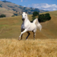 Horse Breeds HD